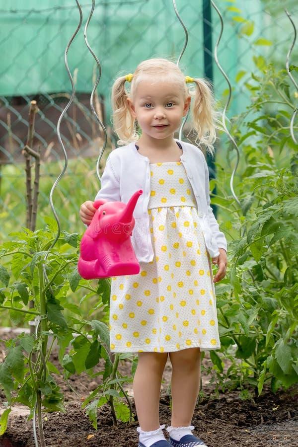 Bambina che innaffia il raccolto fotografia stock libera da diritti