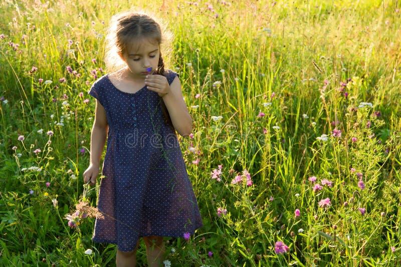 Bambina che odora fiore selvaggio sul prato di estate fotografie stock