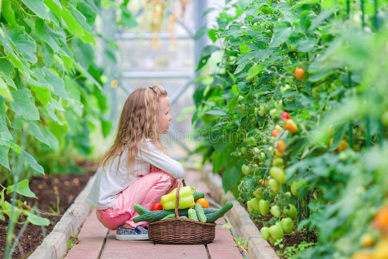 Bambina che raccoglie i cetrioli ed i pomodori del raccolto in serra Tempo di raccogliere fotografia stock