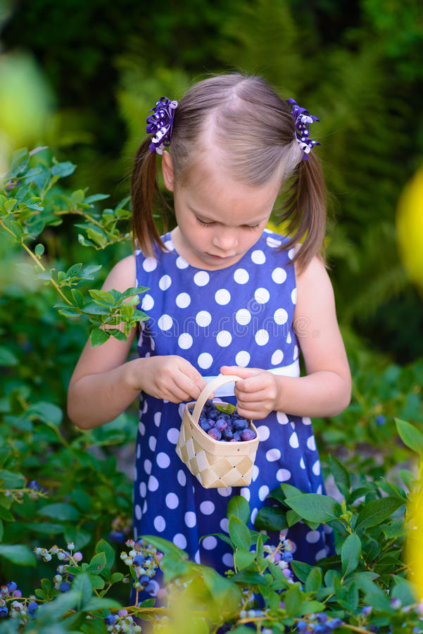 Bambina che seleziona le bacche fresche sul giacimento del mirtillo - sul organi fotografia stock libera da diritti