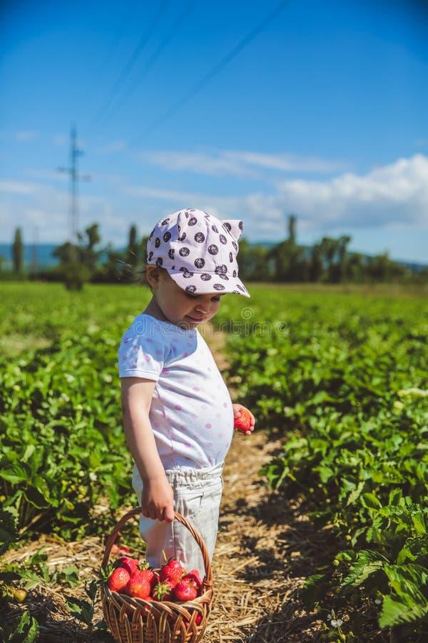 Bambina che seleziona le fragole ad un campo in Ungheria fotografia stock