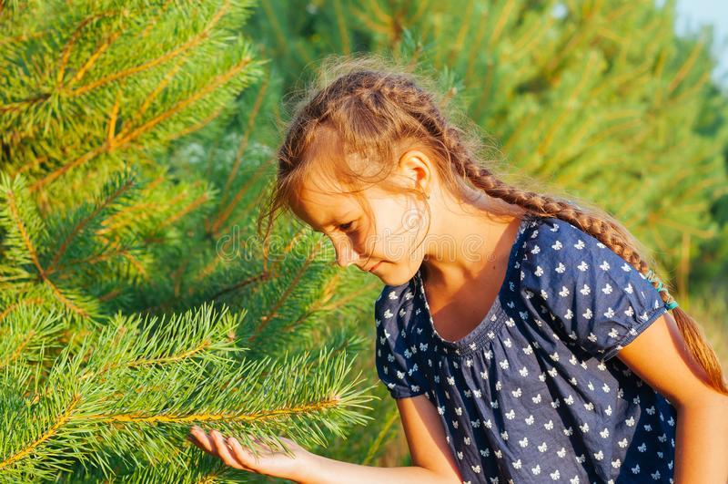 bambina che tiene un ramo dell'albero di Natale, estate nella foresta fotografie stock libere da diritti