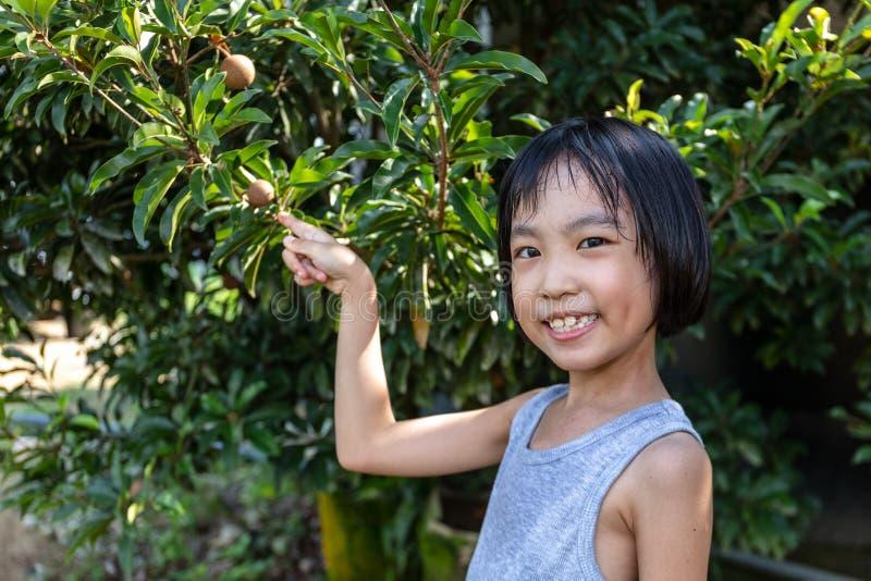 Bambina cinese asiatica che indica la frutta della sapota in azienda agricola organica fotografia stock libera da diritti