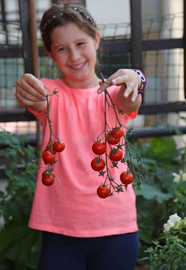 Bambina con la maglietta rosa che ha selezionato i pomodori rossi fotografie stock