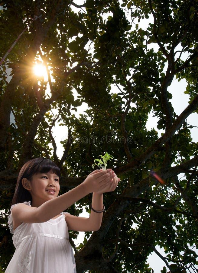 Bambina con luce solare nella foresta fotografia stock