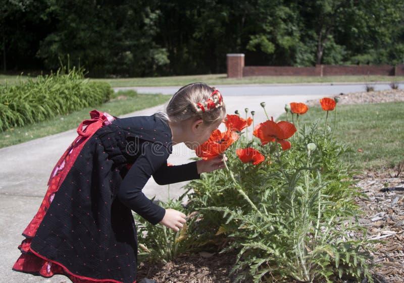 Bambina curiosa che esamina i fiori fotografia stock libera da diritti