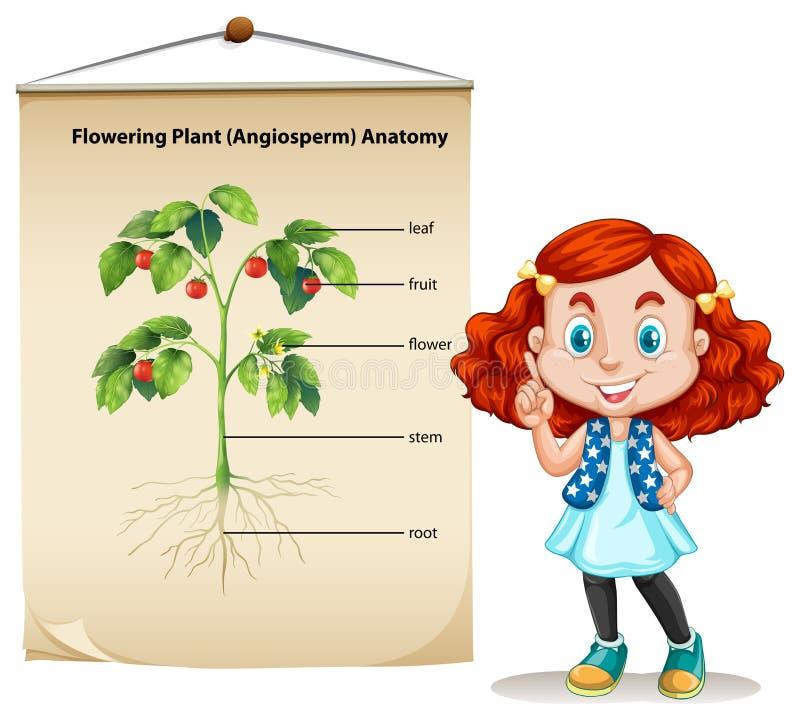 Bambina e anatomia vegetale illustrazione di stock
