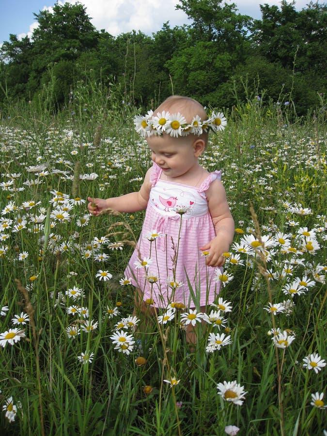 Bambina e camomiles fotografia stock