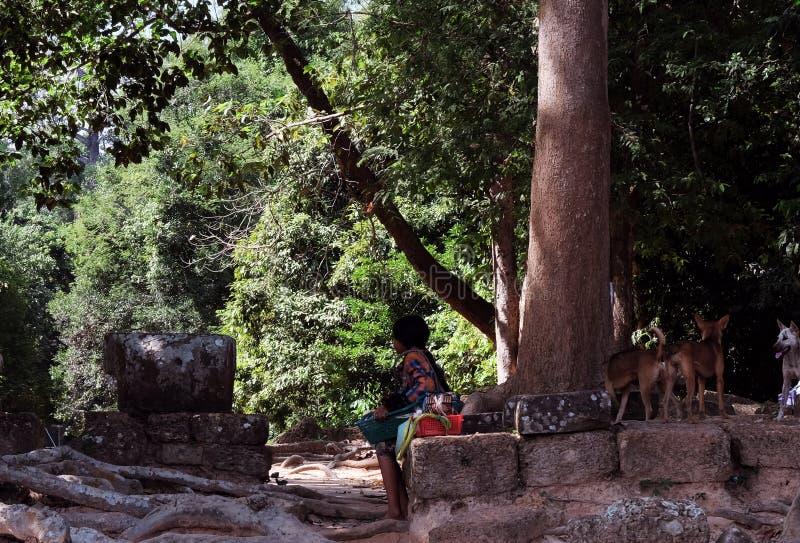 Bambina e cani randagi vicino alle rovine nella foresta pluviale fotografia stock libera da diritti