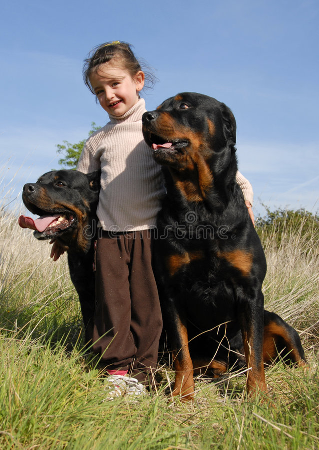 Bambina e rottweilers fotografie stock libere da diritti