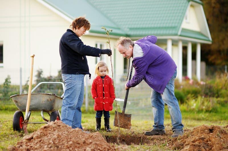 Bambina ed i suoi nonni che piantano un albero fotografia stock libera da diritti