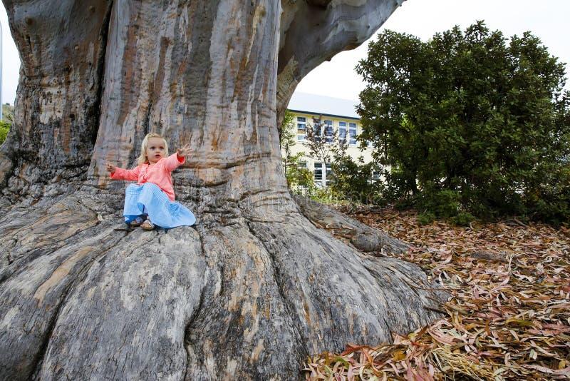 Bambina ed il gigante La base pianta l'albero della sequoia gigante Il Nelson, Nuova Zelanda fotografie stock libere da diritti