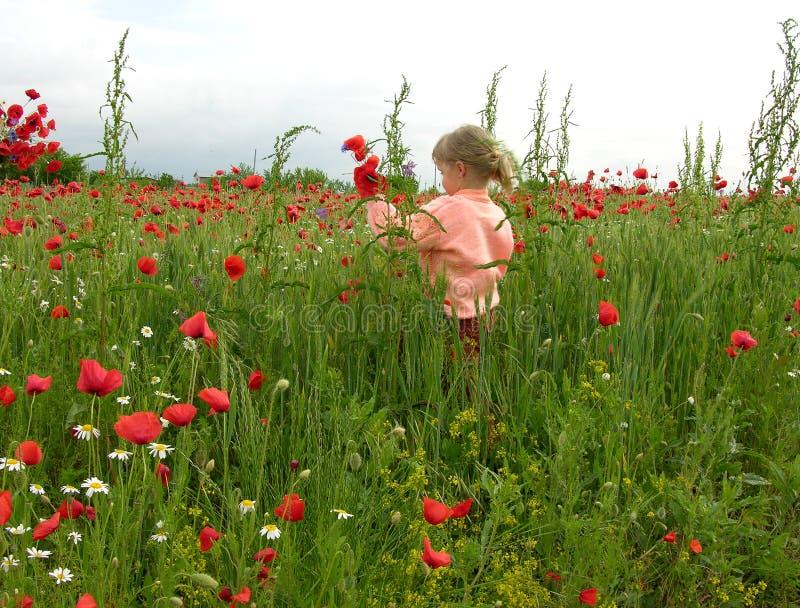 Bambina nel campo del papavero immagini stock libere da diritti