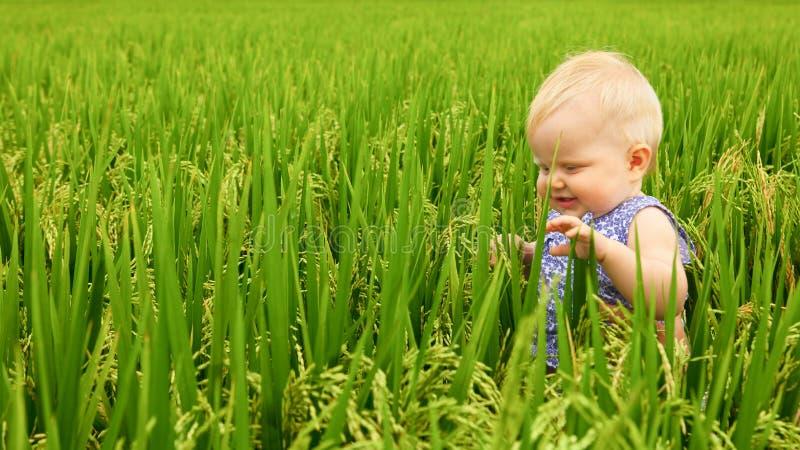 Bambina nel giacimento del riso fotografie stock