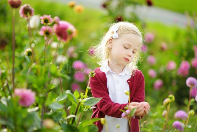 Bambina sveglia che gioca nel campo sbocciante della dalia Bambino che seleziona i fiori freschi nel prato della dalia il giorno  immagini stock