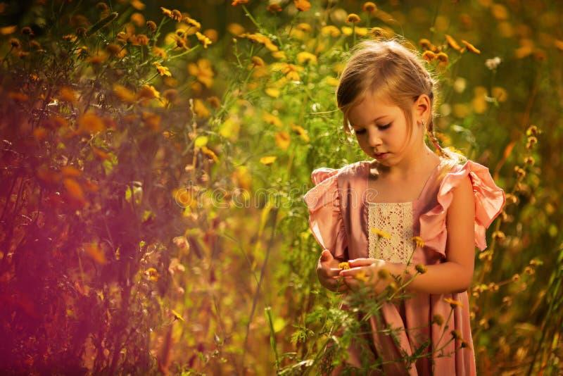 Bambina sveglia che gioca nel campo sbocciante della dalia Bambino che seleziona i fiori freschi nel prato della dalia il giorno  fotografie stock