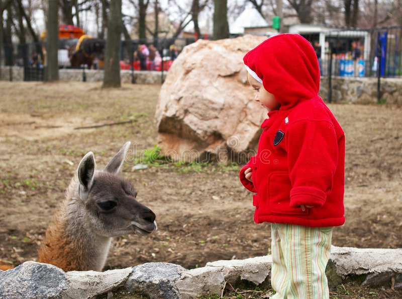 Bambina in un giardino zoologico ed in un lama immagine stock