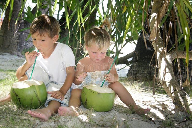 Bambini che bevono la spremuta della noce di cocco sotto la palma fotografia stock