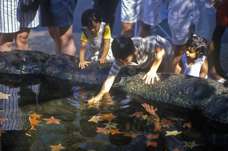 Bambini che giocano nella pozza di marea al mondo del mare, San Diego, CA immagine stock libera da diritti