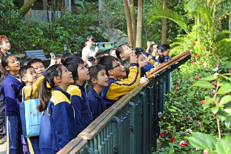 Bambini che guardano gli uccelli nello zoo di Hong Kong immagini stock libere da diritti