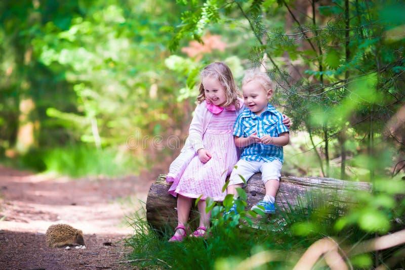 Bambini che guardano un istrice nella foresta fotografia stock