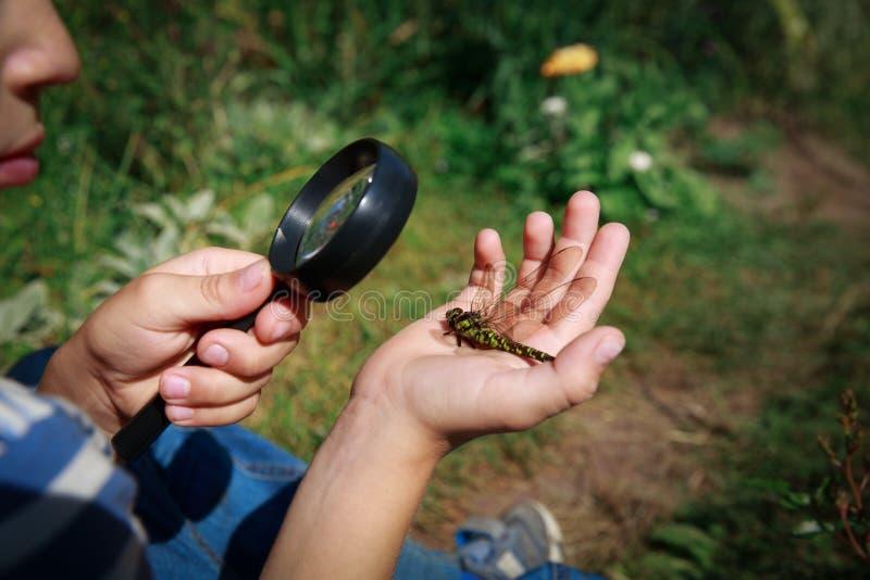 Bambini che imparano un bambino che esplora la libellula con una lente di ingrandimento immagine stock libera da diritti