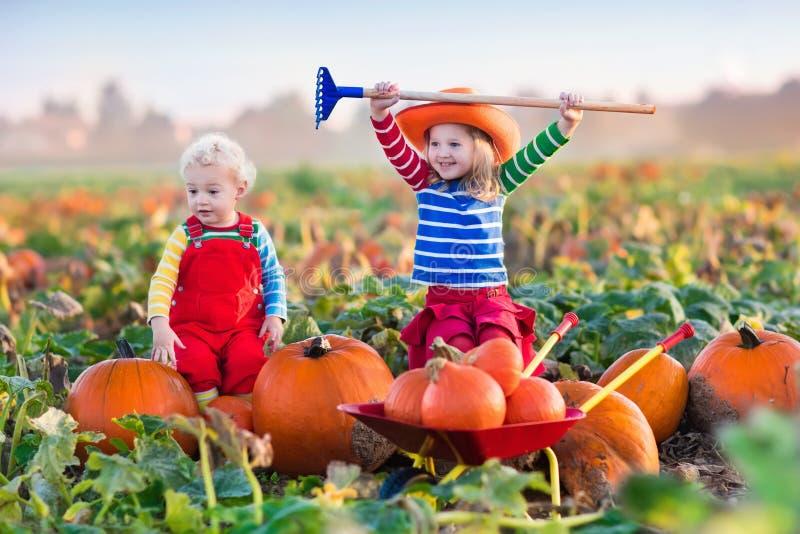Bambini che selezionano le zucche sulla toppa della zucca di Halloween immagine stock libera da diritti