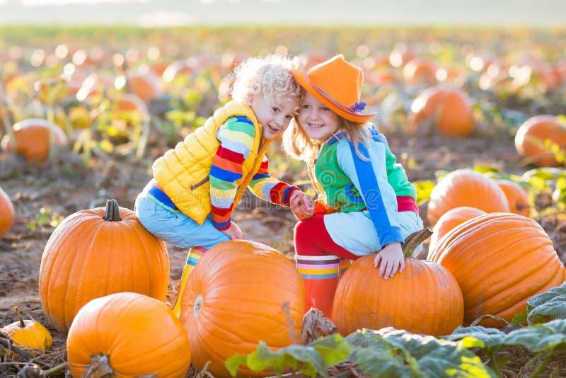 Bambini che selezionano le zucche sulla toppa della zucca di Halloween fotografia stock libera da diritti