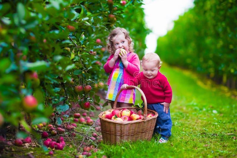 Bambini che selezionano mela fresca su un'azienda agricola fotografia stock libera da diritti