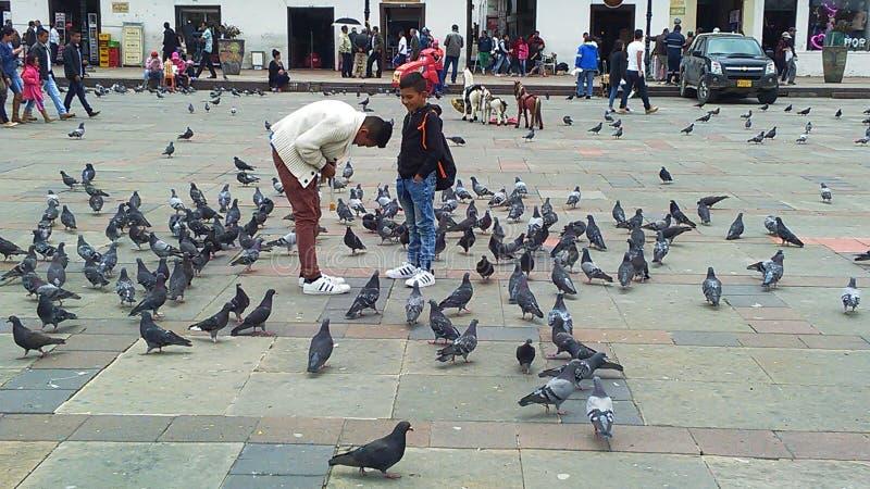 Bambini con il piccione immagine stock