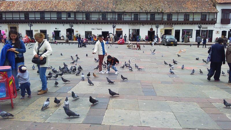 Bambini con il piccione immagine stock libera da diritti