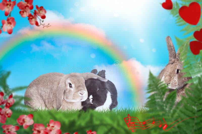 Bambini dei conigli sul prato verde con l'arcobaleno nei precedenti fotografie stock libere da diritti