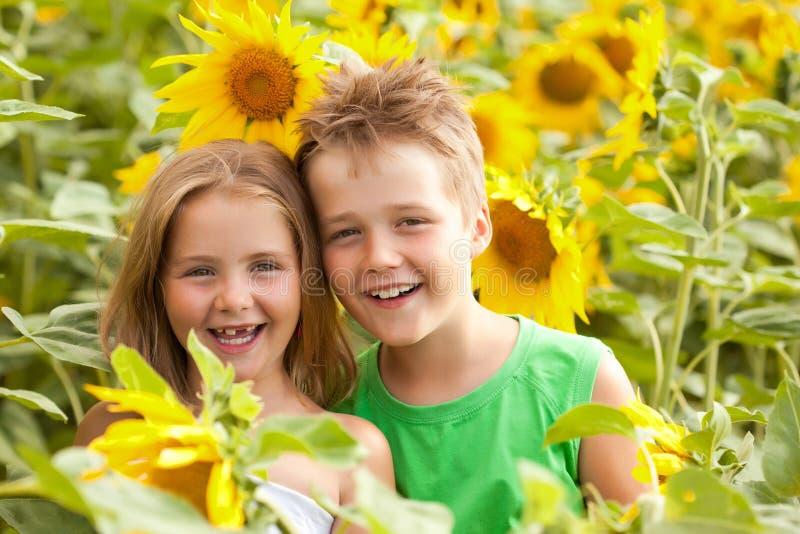 Bambini dolci nel giacimento del girasole fotografia stock libera da diritti