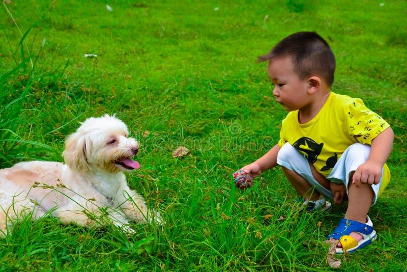 Bambini e cane di Havanese immagine stock libera da diritti