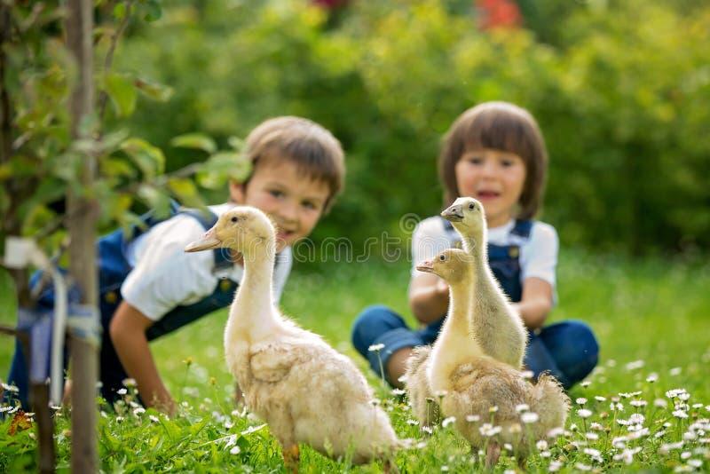 Bambini in età prescolare adorabili, fratelli del ragazzo, giocanti con poca d immagine stock