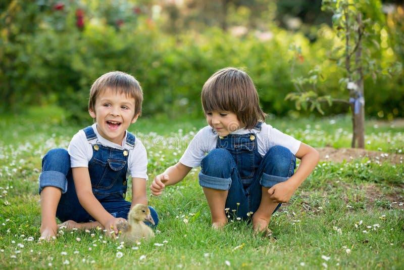 Bambini in età prescolare adorabili, fratelli del ragazzo, giocanti con poca d immagine stock libera da diritti
