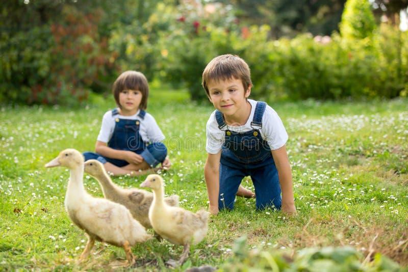 Bambini in età prescolare adorabili, fratelli del ragazzo, giocanti con poca d fotografie stock libere da diritti