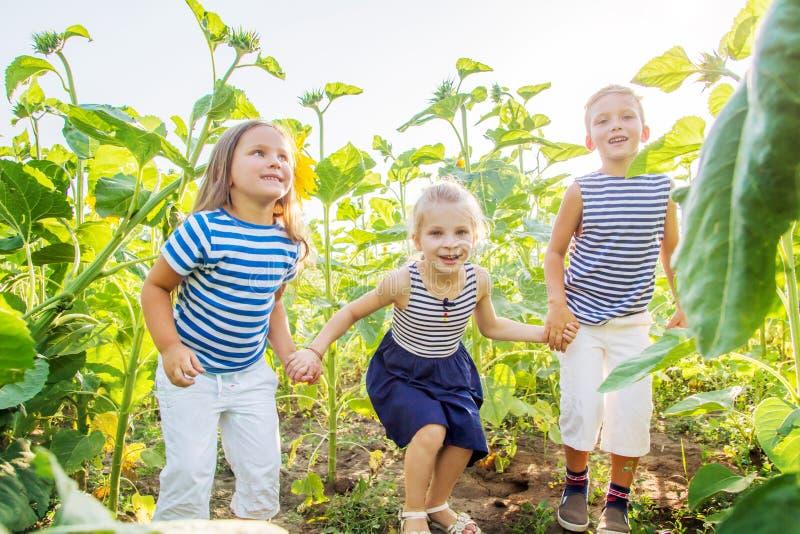 Bambini felici divertendosi nel campo dei girasoli fotografia stock