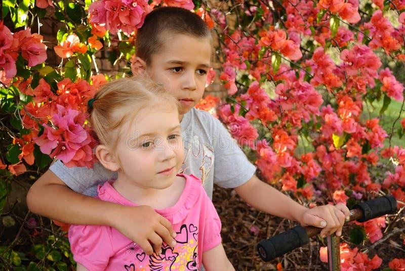 Bambini in giovane età che fanno una pausa il cespuglio del fiore immagine stock