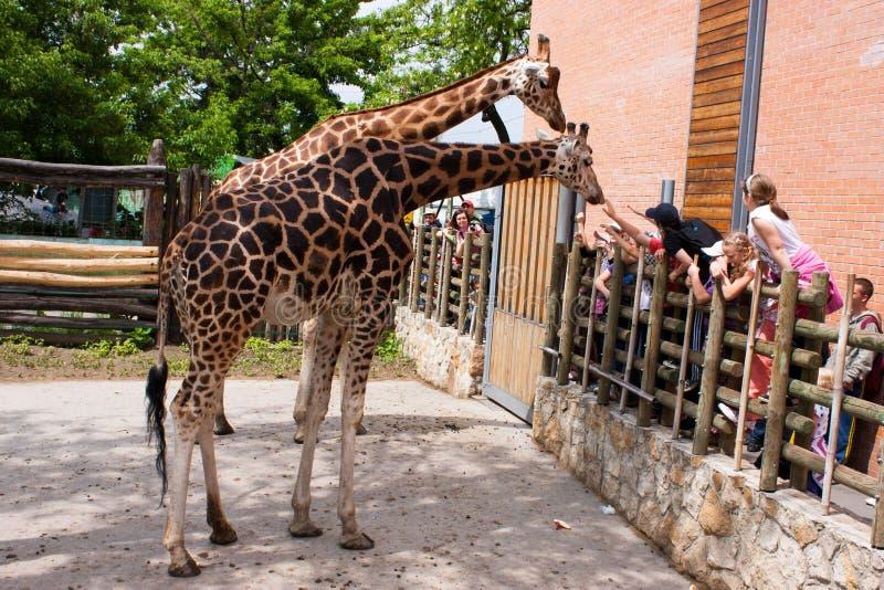 Bambini nel giardino zoologico fotografia stock libera da diritti