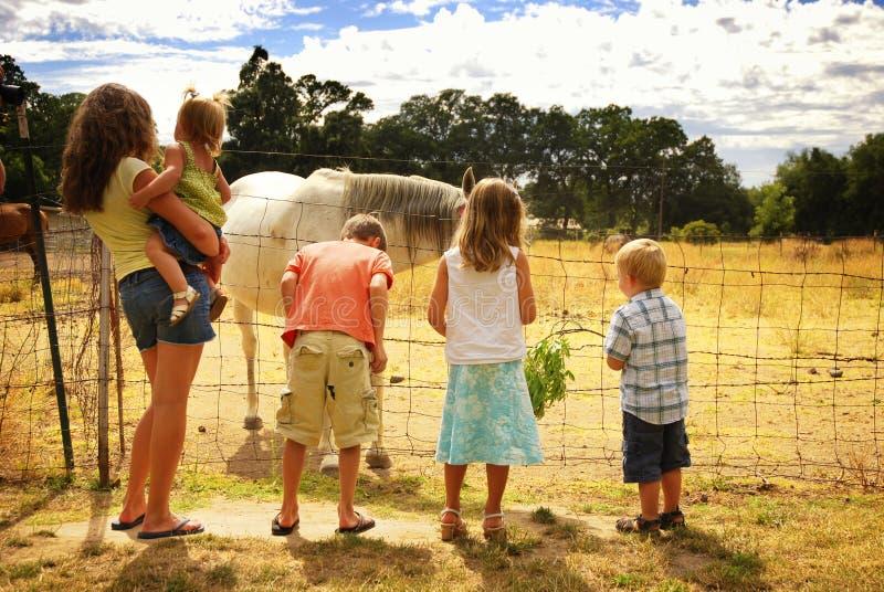 Bambini sull'azienda agricola del cavallo immagine stock libera da diritti