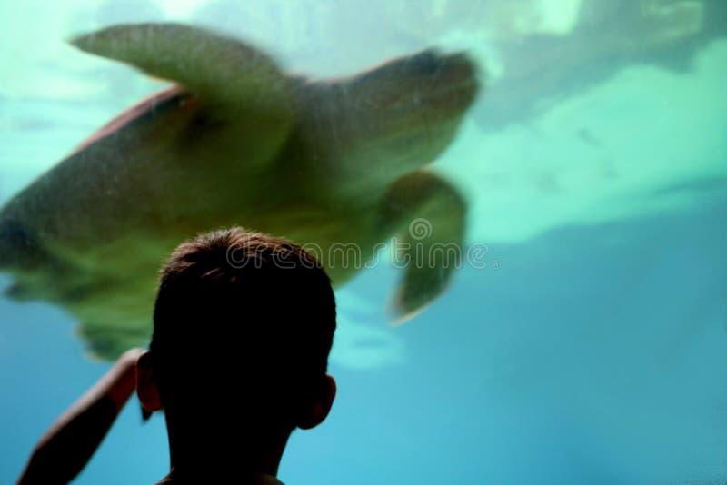 Bambino all'acquario fotografie stock