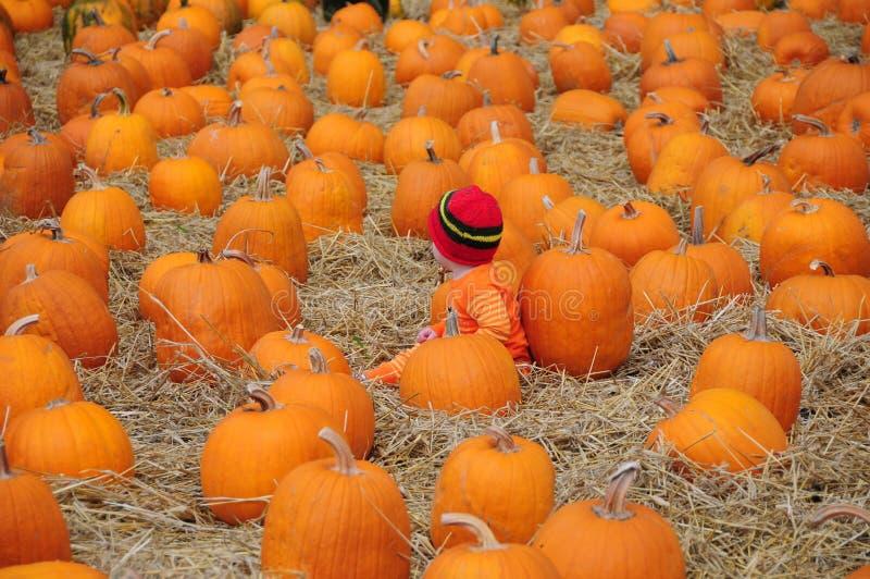 Bambino in cappello rosso fra le zucche immagine stock libera da diritti