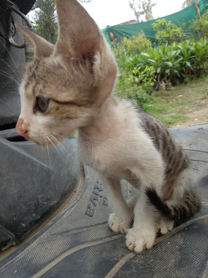 Bambino Cat Cute Peaceful Kitten fotografia stock libera da diritti
