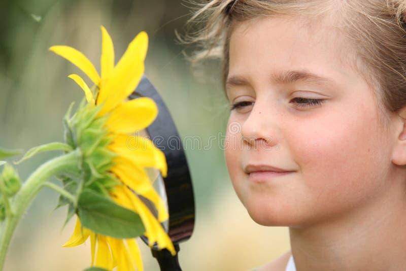Bambino che esamina un girasole immagini stock libere da diritti