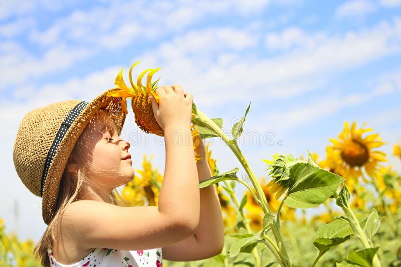 Bambino che gioca nel giacimento del girasole il giorno di estate soleggiato fotografia stock