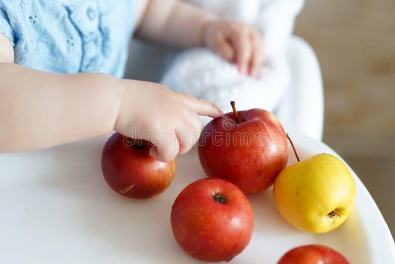 Bambino che mangia frutta mele gialle e rosse in mani della bambina in cucina soleggiata Nutrizione sana per i bambini Alimento s fotografia stock libera da diritti