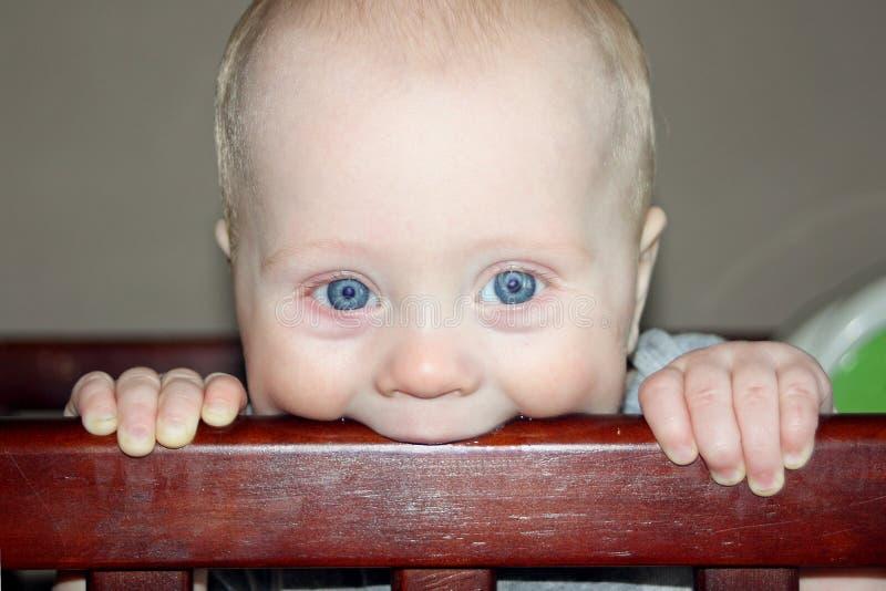 Bambino che mastica sulla greppia fotografia stock libera da diritti