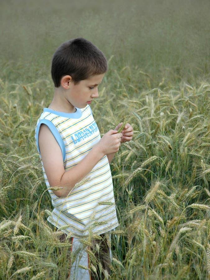 Bambino con cereale immagini stock libere da diritti
