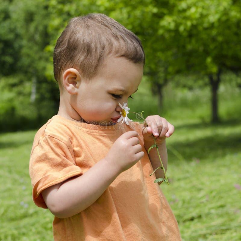 Bambino con il fiore della margherita fotografia stock libera da diritti